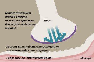 Рис. 1. Ботокс блокирует передачу импульс с нервного волокна к мышце, вызывая ее паралич.